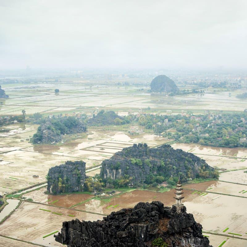 A opinião surpreendente do panorama do arroz coloca, Ninh Binh, Vietname imagem de stock