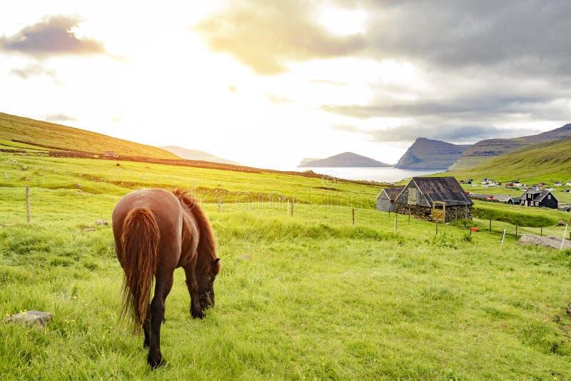 Opinião surpreendente o cavalo preto na exploração agrícola rural que pasta wi da grama verde imagem de stock royalty free