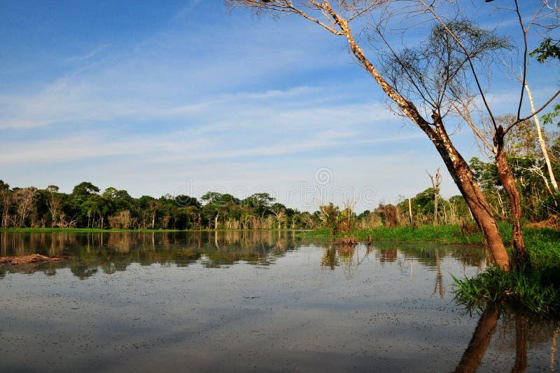 Opinião típica da selva de Amazon imagens de stock