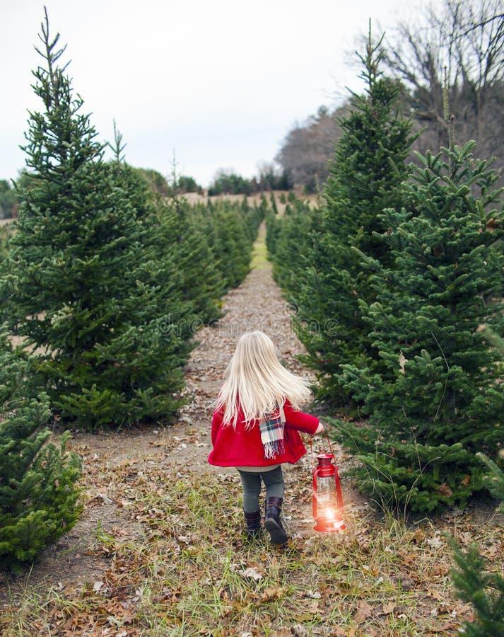 Opinião traseira a menina que anda ao longo da aleia da árvore de abeto fotografia de stock