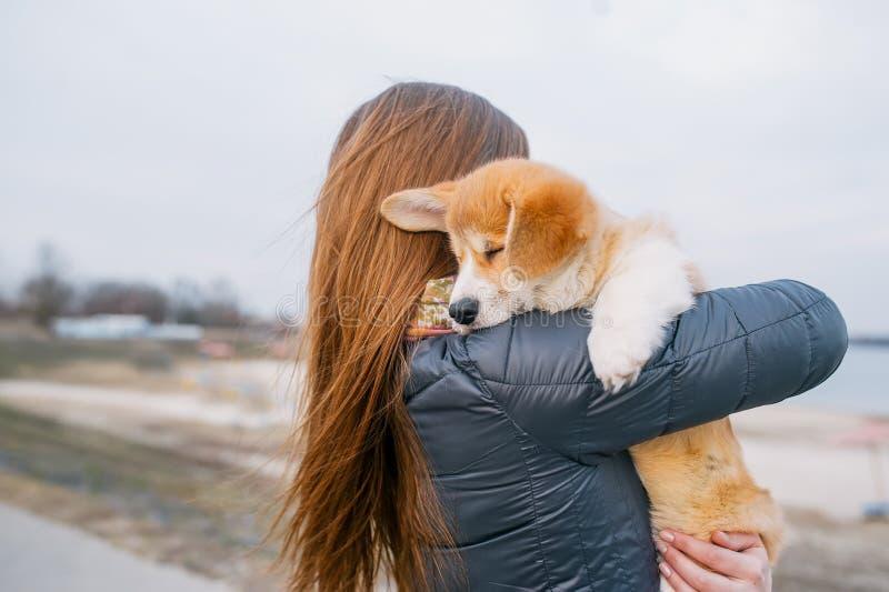 Opinião traseira a moça com pouco cachorrinho do corgi em suas mãos no parque imagem de stock