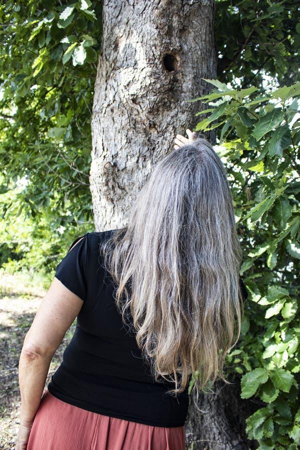 Opinião traseira a mulher com o cabelo cinzento longo que olha acima em um furo em um tronco de árvore fotografia de stock