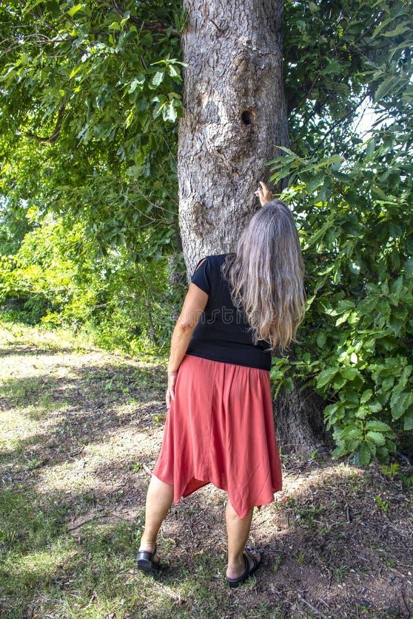 Opinião traseira a mulher no vestido com cabelo cinzento longo que aponta acima em um furo em um tronco de árvore imagens de stock royalty free