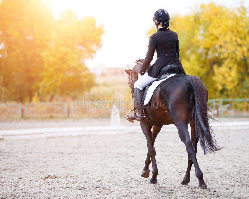 Opinião traseira a mulher nova do cavaleiro no cavalo de baía fotos de stock