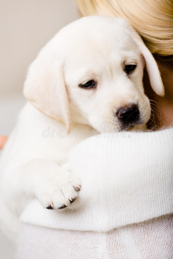 Opinião traseira o cachorrinho do abraço da mulher fotografia de stock