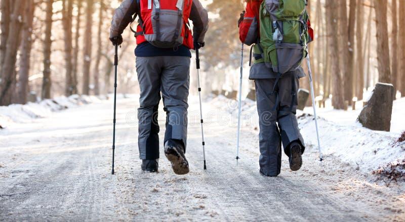 Opinião traseira os caminhantes na floresta no inverno imagem de stock royalty free