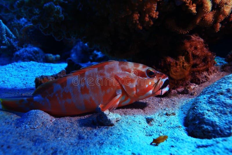 Opinião tropical do mar com peixes incomuns fotos de stock royalty free