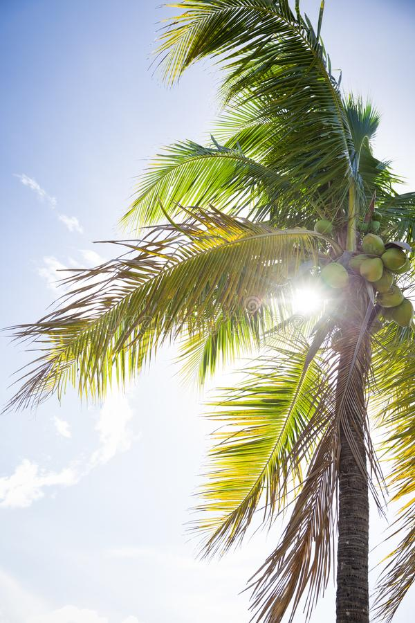 Opinião tropical do projeto do curso do feriado do fundo da paisagem da natureza da selva das palmeiras C?u azul Console mediterr foto de stock royalty free