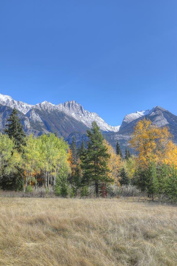 Opinião vertical de Rocky Mountain com álamos tremedores amarelos imagem de stock royalty free