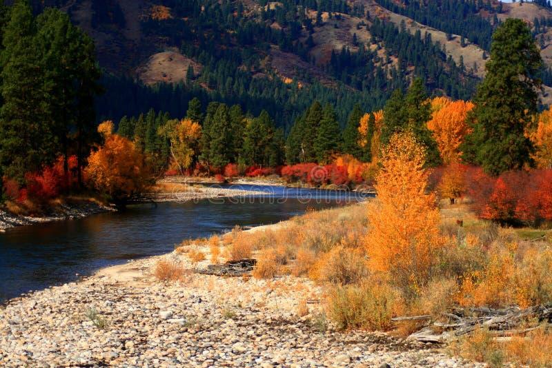 Opinión 4 del otoño de Alder Creek fotos de archivo