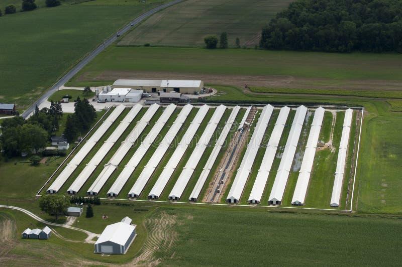 Opinión aérea de la granja lechera de los graneros corporativos modernos de poste foto de archivo libre de regalías