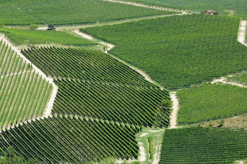 Opinión aérea de los viñedos en un día soleado en Piamonte, Italia imagen de archivo libre de regalías