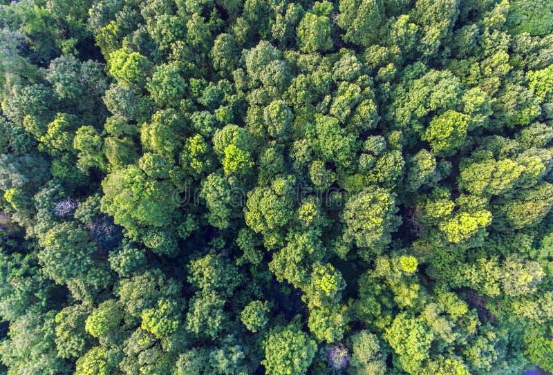Opinión aérea del bosque tropical imagen de archivo