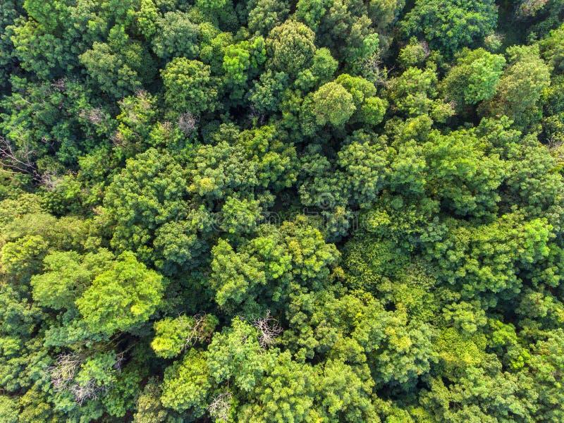 Opinión aérea del bosque tropical imagen de archivo libre de regalías