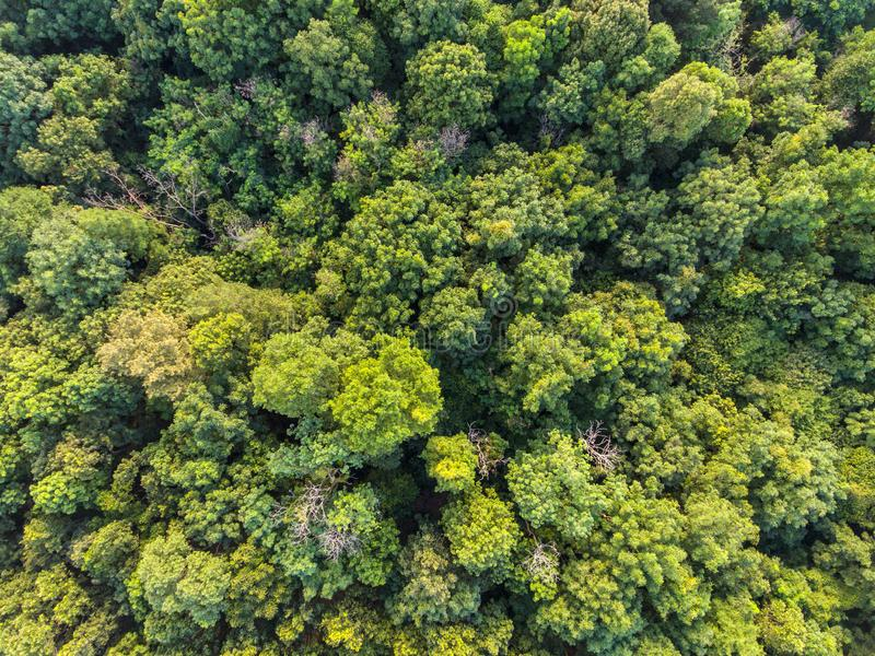 Opinión aérea del bosque tropical fotografía de archivo libre de regalías