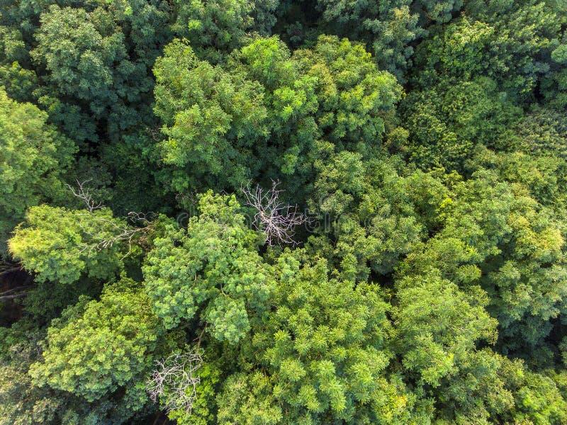 Opinión aérea del bosque tropical fotografía de archivo