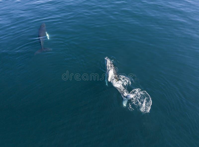 Opinión aérea la ballena jorobada, Islandia imagenes de archivo