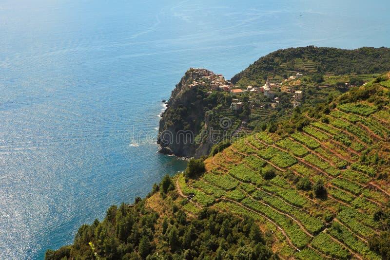 Opinión aérea sobre viñedos y el mar Mediterráneo. imágenes de archivo libres de regalías