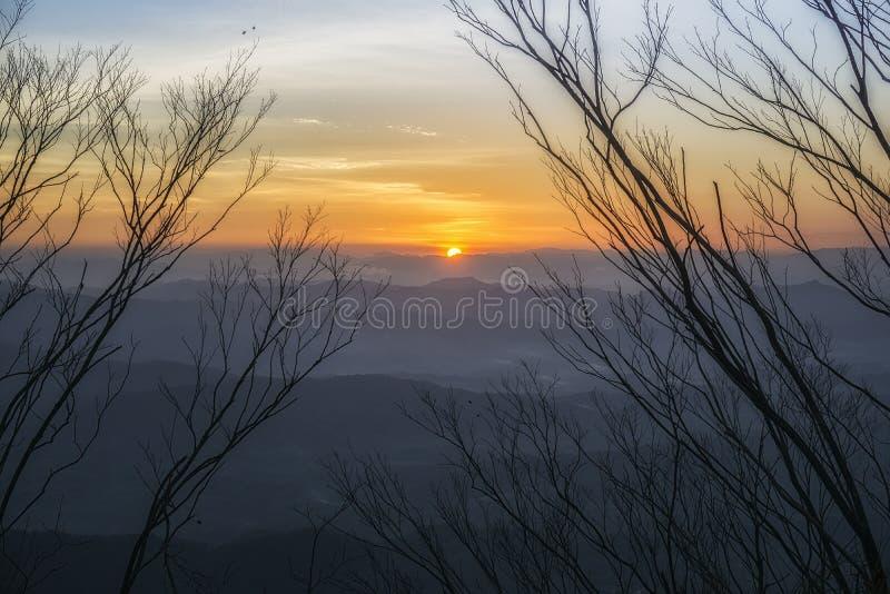 Opinión asombrosa de la salida del sol con la silueta de la rama imagenes de archivo