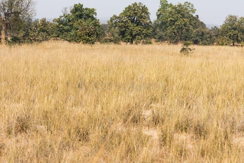 Opinión cercana seca del arbusto y del herbaje que parece impresionante cerca de un pequeño bosque rural foto de archivo libre de regalías