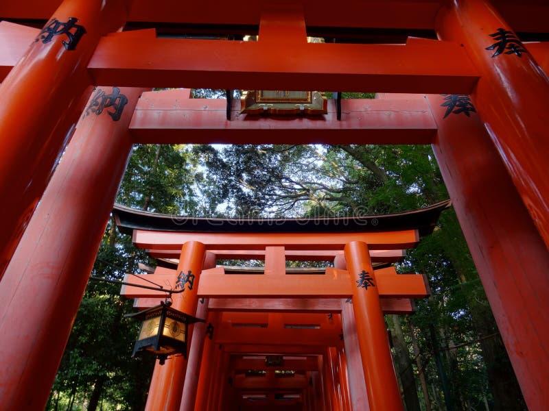 Opinión de ángulo bajo de las puertas rojas de Torii en la capilla de Fushimi Inari en Kyoto foto de archivo libre de regalías