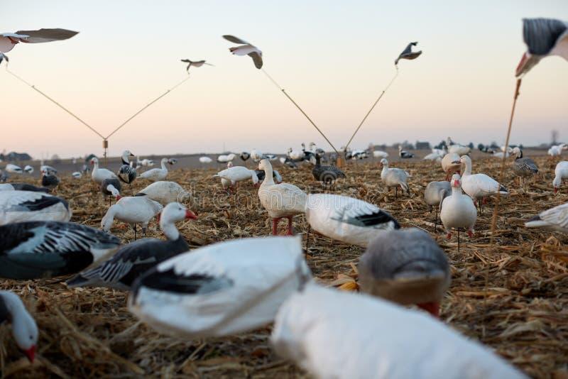 Opinión de ángulo bajo de las trampas de las aves del agua fotografía de archivo