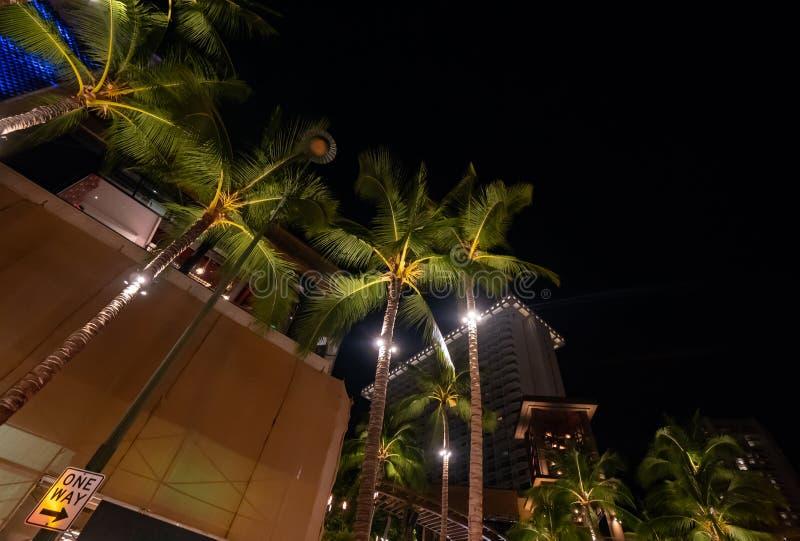 Opinión de ángulo bajo de palmeras altas y de edificios iluminados en la noche imágenes de archivo libres de regalías