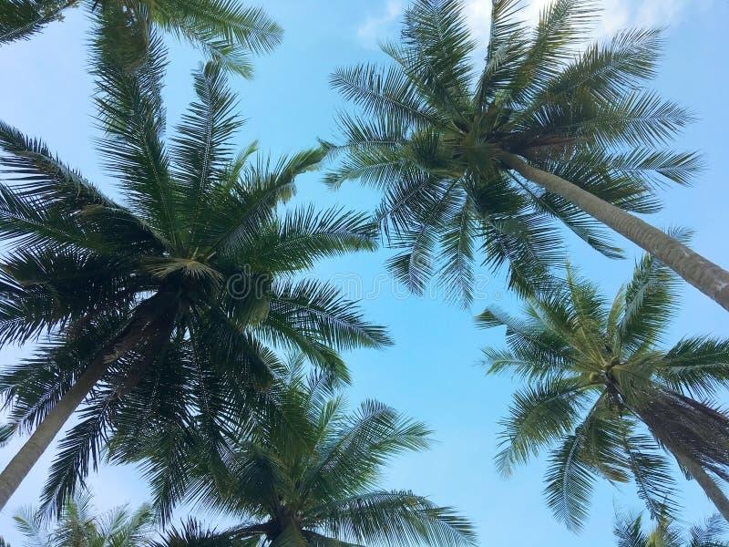 Opinión de ángulo bajo de palmeras en la playa tropical imagenes de archivo