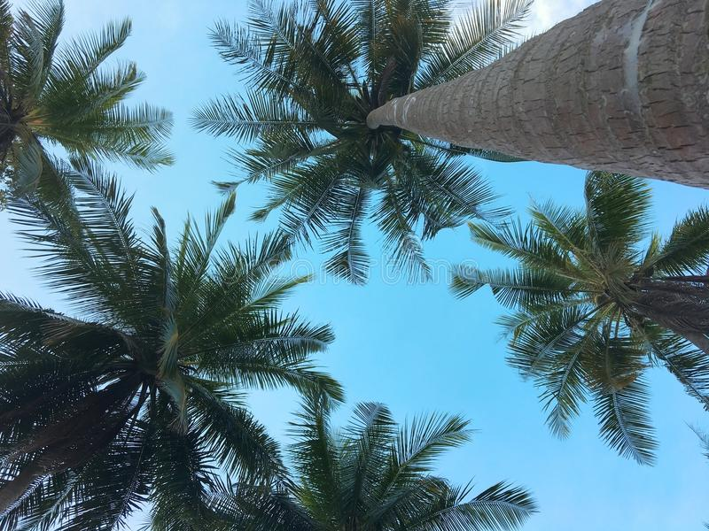 Opinión de ángulo bajo de palmeras en la playa tropical imagen de archivo libre de regalías