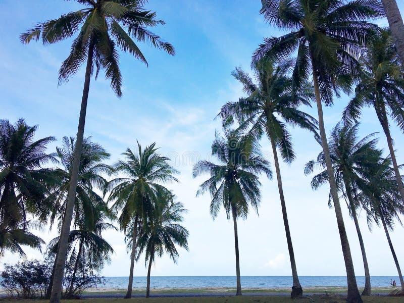 Opinión de ángulo bajo de palmeras en la playa tropical fotografía de archivo
