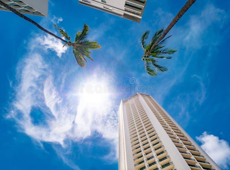 Opinión de ángulo bajo de un edificio blanco alto y de palmeras con el cielo azul en fondo foto de archivo