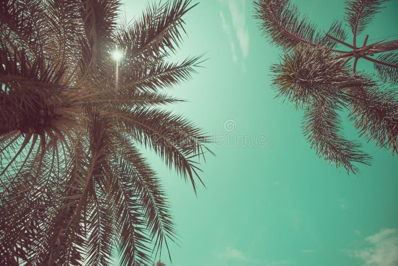 Opinión de ángulo de las palmeras foto de archivo