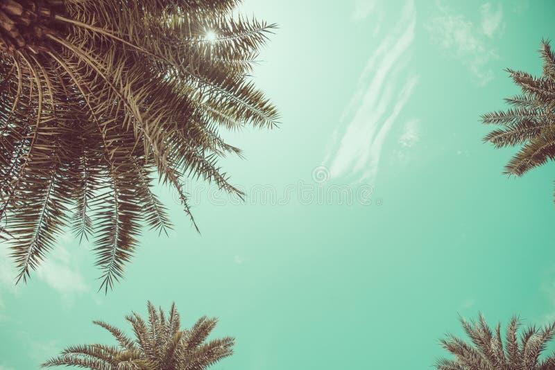 Opinión de ángulo de las palmeras fotografía de archivo