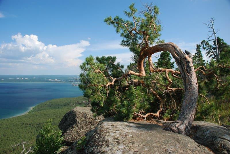Opinión de árbol del arco fotografía de archivo libre de regalías