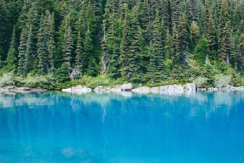 Opinión de árboles del lago y de pino foto de archivo libre de regalías