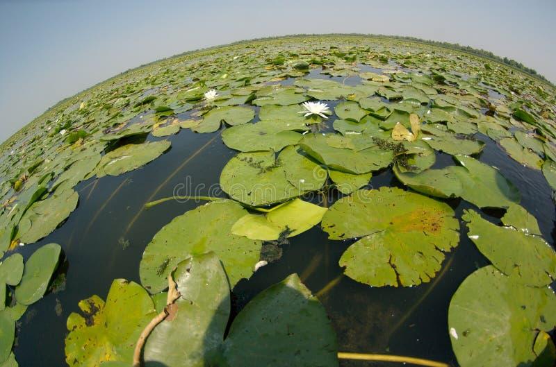 Opinión de Fisheye de un lago imágenes de archivo libres de regalías