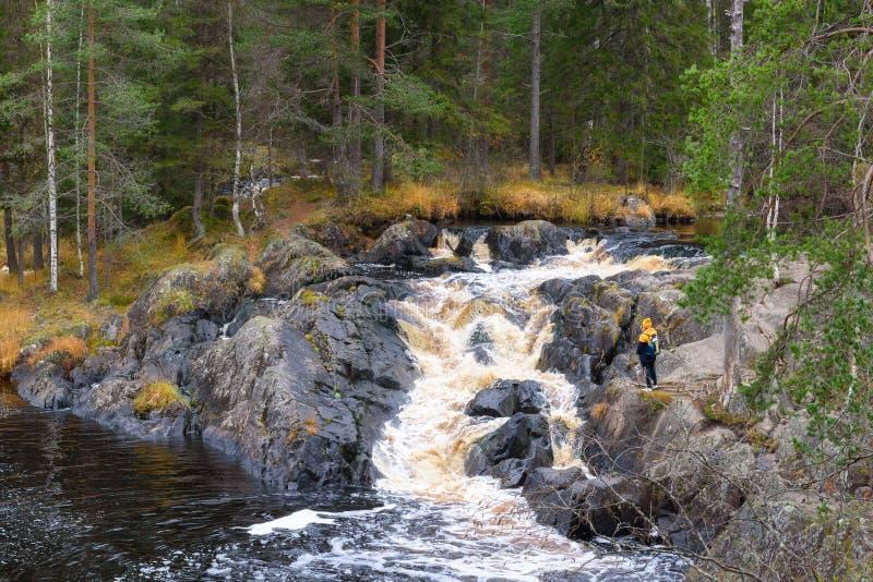 Opinión de flujo de corriente del río del bosque Corriente profunda de la cascada del río del bosque Escena de la cascada del río fotos de archivo libres de regalías