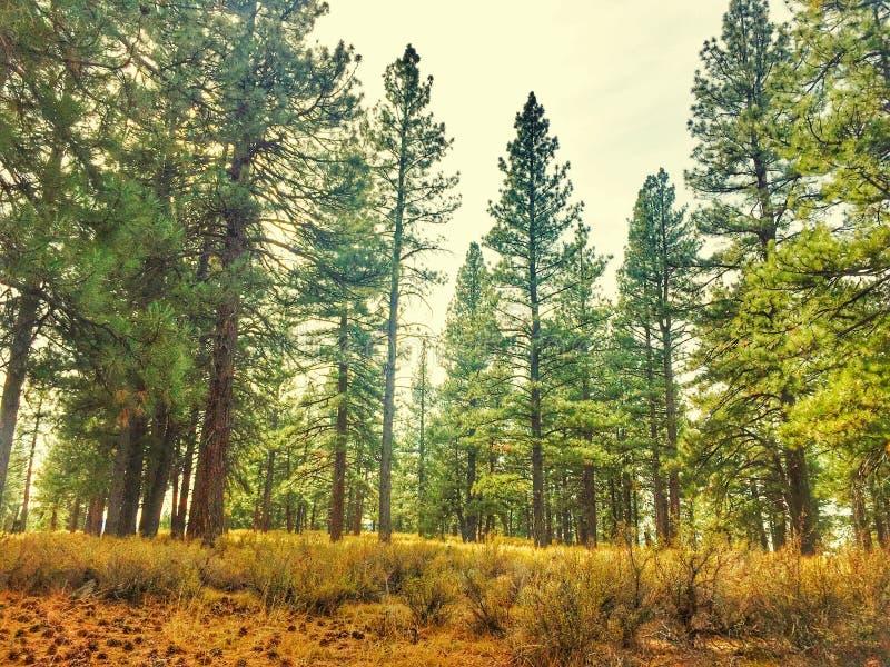 Opinión de Forrest fotos de archivo