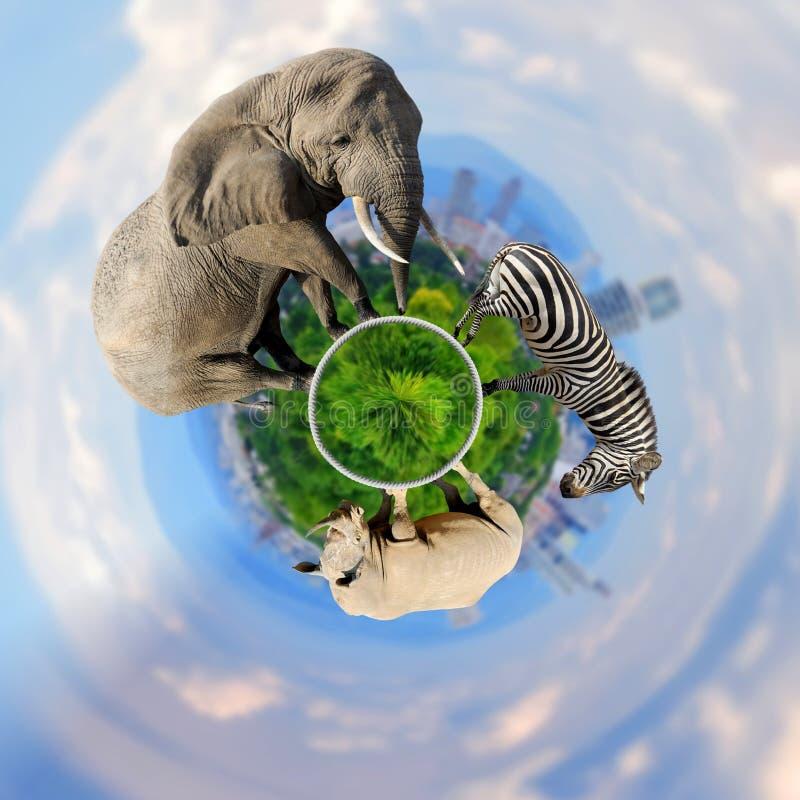 opinión de 360 grados el elefante, cebra, rinoceronte con la ciudad en del th fotografía de archivo libre de regalías