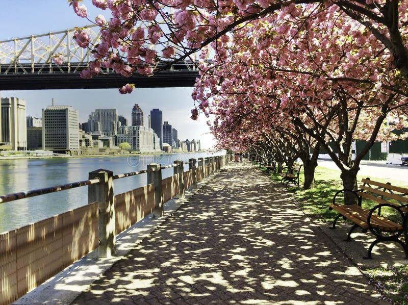 Opinión de la ciudad con Cherry Blossoms, Nueva York