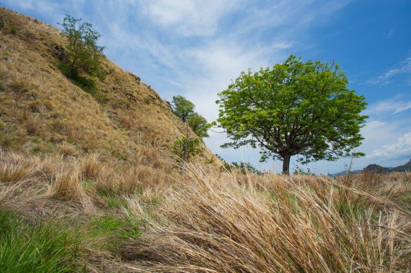 Opinión de la colina fotografía de archivo libre de regalías