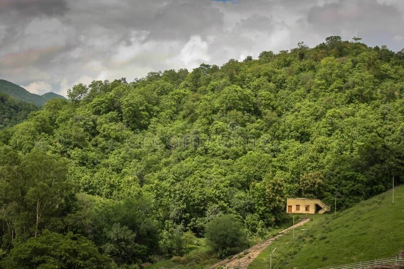 Opinión de la colina del bosque del polo imagenes de archivo