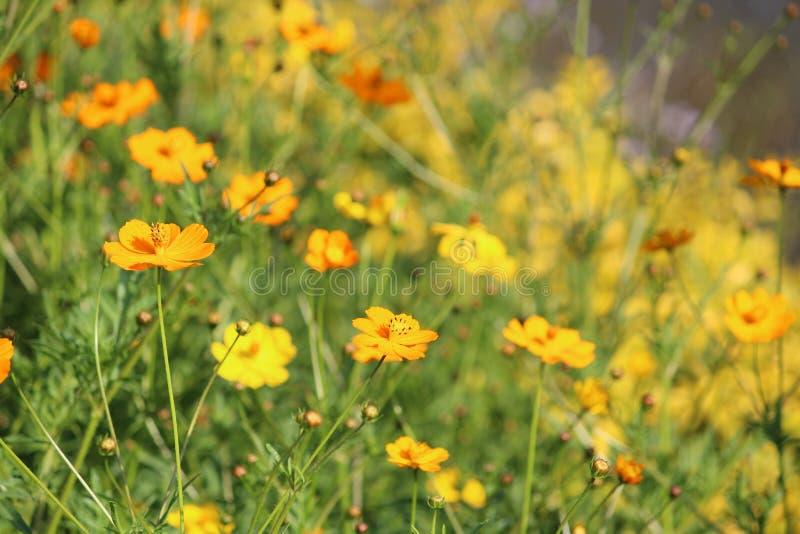 Opinión de la flor hermosa imagen de archivo