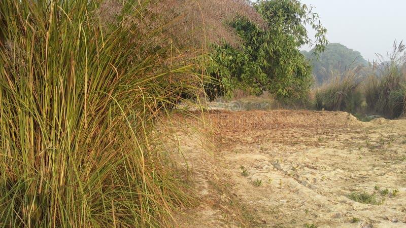 Opinión de la mañana con la hierba y las hojas de los árboles de bambú foto de archivo