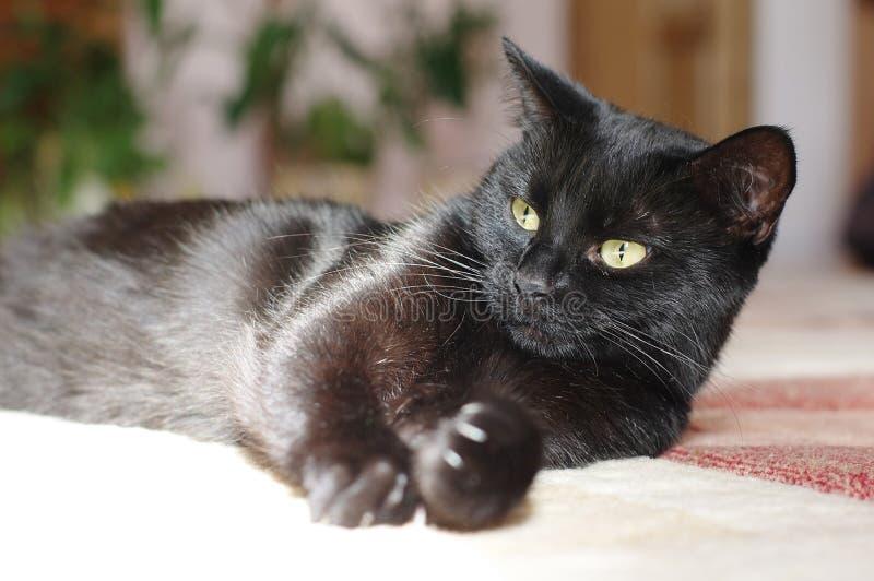 Opinión de la macro del gato negro Ojo verde foto de archivo libre de regalías