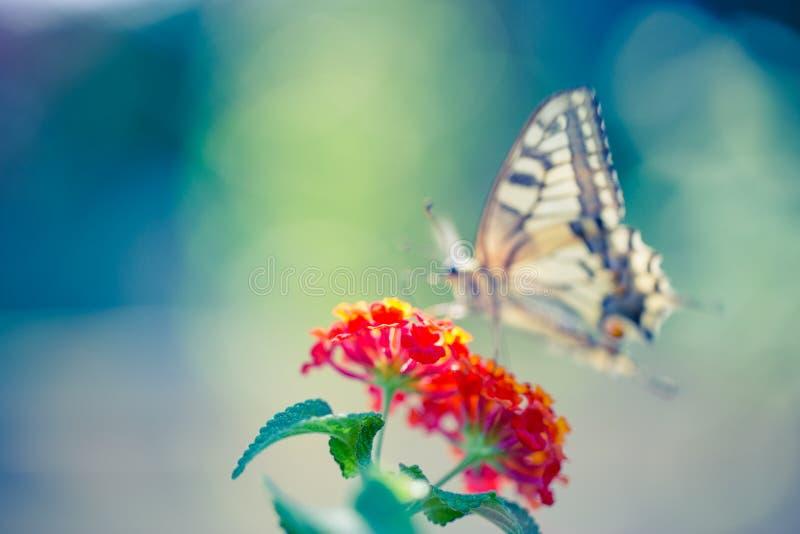 Opinión de la naturaleza del verano una mariposa hermosa con el prado colorido Escena maravillosa del verano bajo luz del sol imagen de archivo