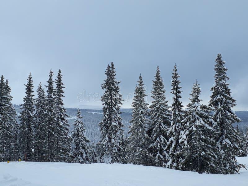Opinión de la naturaleza en Noruega fotografía de archivo libre de regalías