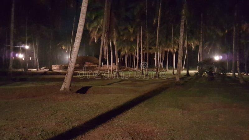 Opinión de la noche de la granja de árboles de coco en Sri Lanka imágenes de archivo libres de regalías
