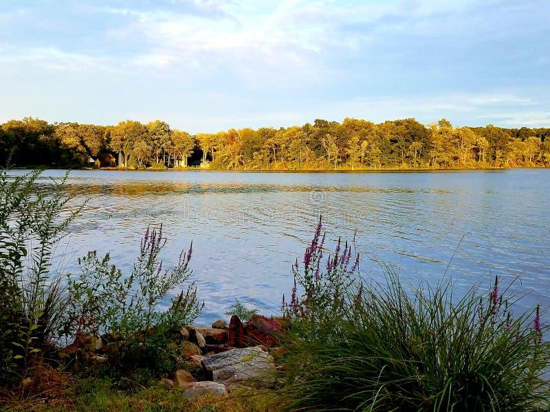 Opinión de la orilla del lago en la oscuridad con las plantas imagenes de archivo
