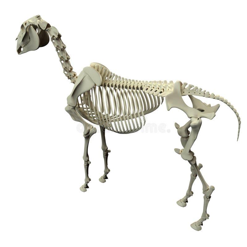 Opinión De La Parte Posterior Del Esqueleto Del Caballo - Anatomía ...